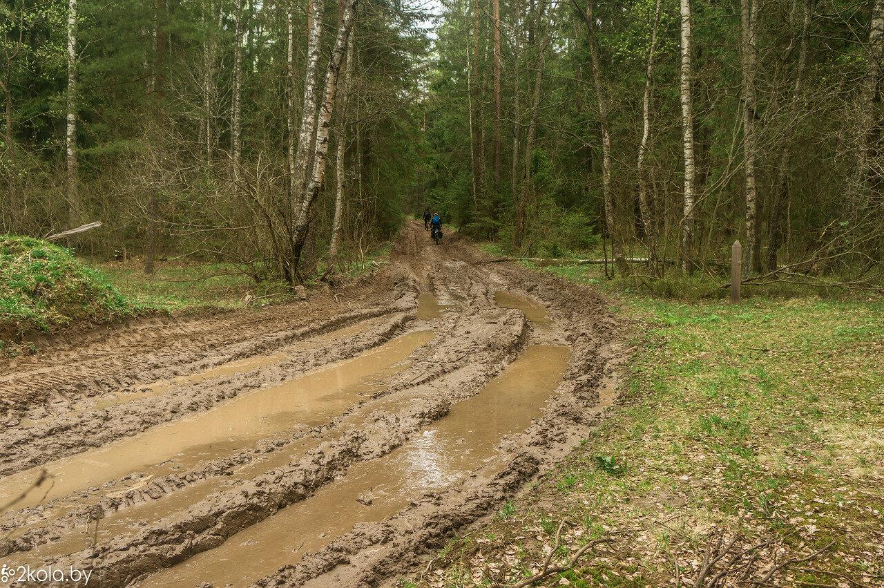 Дорога через лес вблизи д. Отрубок